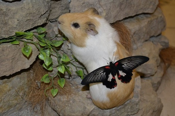 Республика бабочек