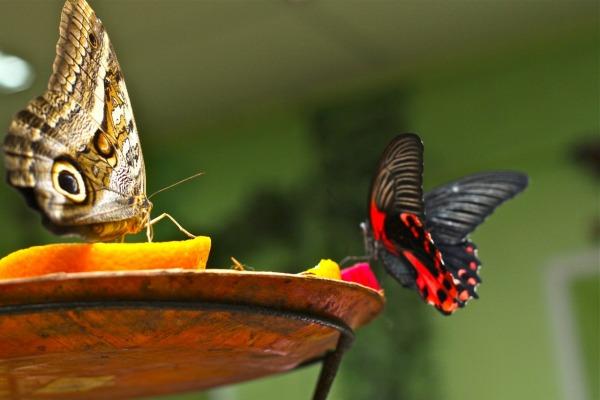 Выставка живых тропических бабочек «Мир Бабочек»