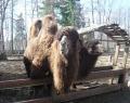 Ландшафтный зоопарк «Приют Белоснежки»