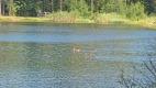 Озеро-карьер №1