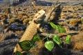 Выставка рептилий «Croco Park»