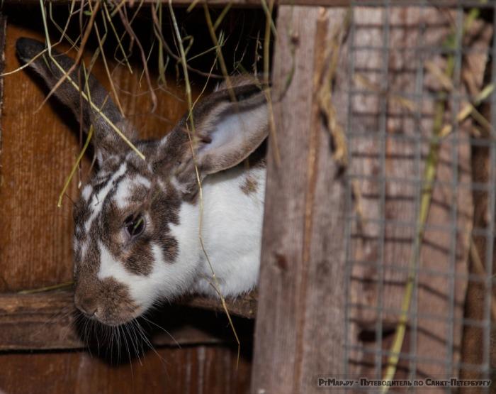 Крольчиха-мать