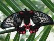 Сад бабочек «Миндо»