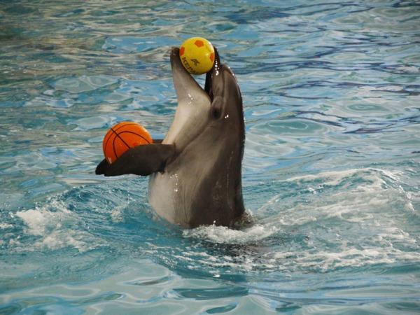 Дельфинарий «Дельфин Ленд»