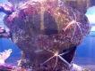 Океанариум Нептун