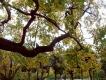 Сад Смольного собора