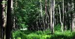 Пискаревский лесопарк