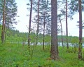Круглое озеро (Тосненский район)