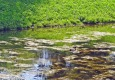 Продолговатый пруд
